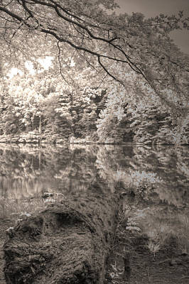 Photograph - Peaceful Lake by David Troxel
