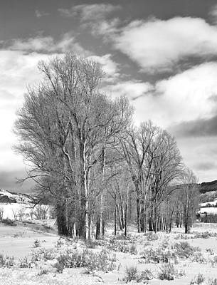 Photograph - Peaceful Moments by Sandra Bronstein