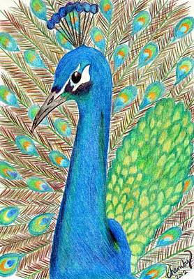 Drawing - Peacock by Carol Hamby