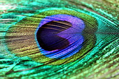Mural Photograph - Peacock Feather by Heike Hultsch