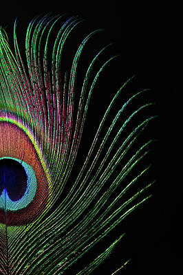 Photograph - Peacock Feather by Ithinksky