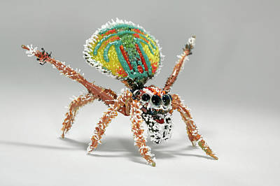 Glass Blowing Photograph - Peacock Spider by Tomasz Litwin