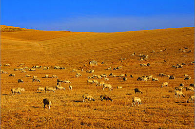 Sheep Grazing In The Countryside Tarquinian Art Print