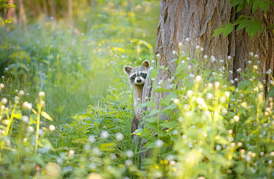 Woods Photograph - Peek A Boo by Carrie Ann Grippo-Pike