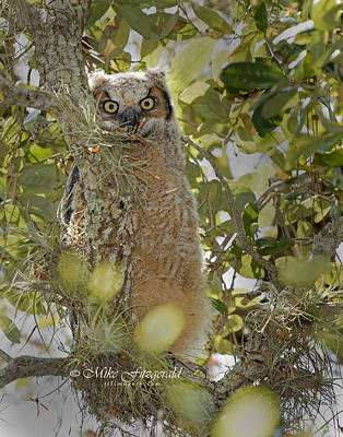 Photograph - Peek-a-boo by Mike Fitzgerald