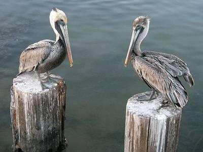 Photograph - Pelican Brief by Michael Davis
