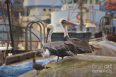 Photograph - Pelican Duo by Donna Greene