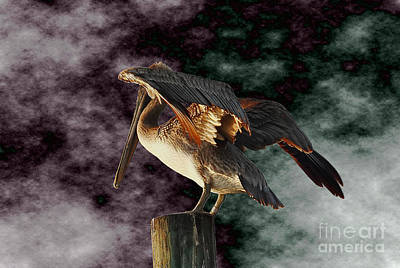 Digital Art - Pelican On Post by Roger Soule