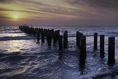 Photograph - Pelican Pier by Curtis Dale