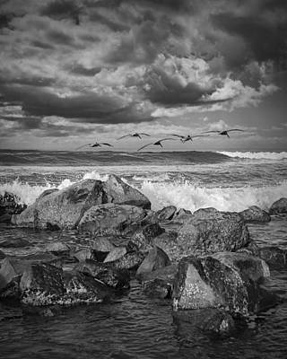 Giuseppe Cristiano - Pelicans over the surf on Coronado by Randall Nyhof