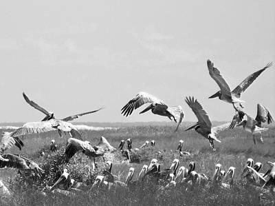 Pelicans Art Print by Thomas Leon