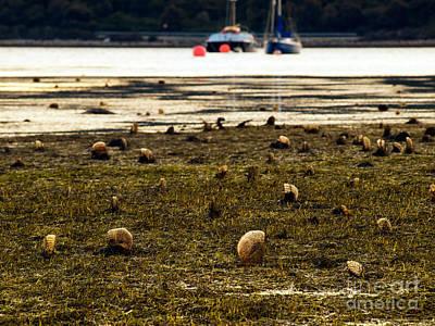 Ebbtide Photograph - Pen Shell Field by Sinisa Botas