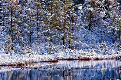 Photograph - Penomah Bog First Snow by Jeff Sinon