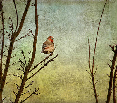 Perched Art Print