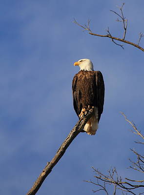 Photograph - Perched  by Scott Rackers