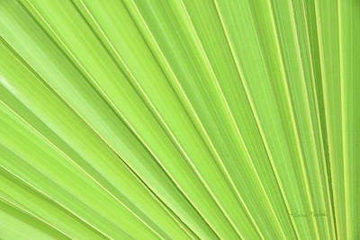 Tropical Leaves Photograph - Perfect by Ramona Murdock
