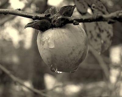 Photograph - Persimmon by Patricia Januszkiewicz