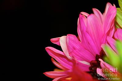 Photograph - Petal Me Pink by Susan Herber