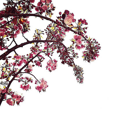 Petites Fleurs De Printemps Art Print by Natasha Marco