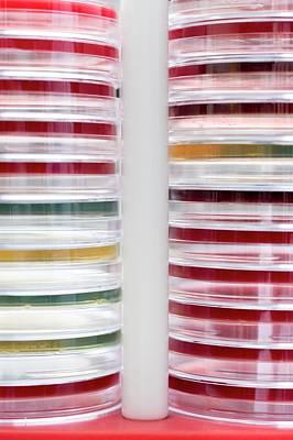 Petri Dishes Art Print