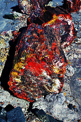 Crystals Photograph - Petrified Wood Log Rainbow Crystalization At Petrified Forest National Park by Shawn O'Brien