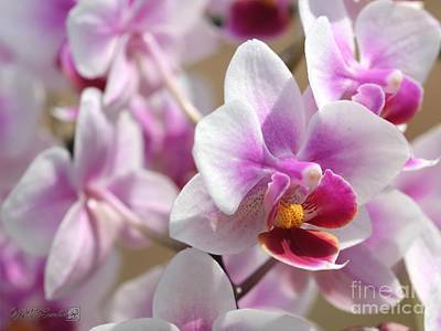 Outoors Photograph - Phalaenopsis Orchid Named Be Tris by J McCombie