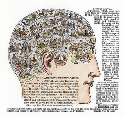 Brain Painting - Phrenology, 1867 by Granger