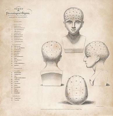 Phrenology Head Regions Print by King's College London