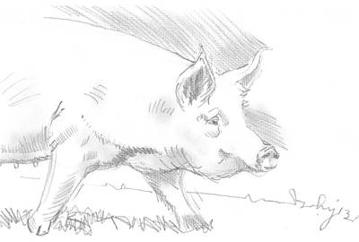 Drawing - Pig Drawing by Mike Jory