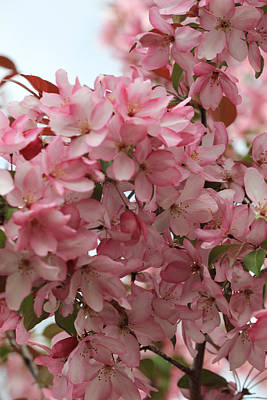 Photograph - Pink Crabapple Branch by Donna Munro