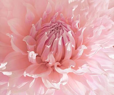 Photograph - Pink Dahlia Flower Macro by Jennie Marie Schell