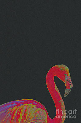 Seagull Mixed Media - Pink Flamingo by Celestial Images