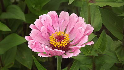 Photograph - Pink Flower by John Wartman