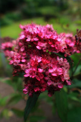 Photograph - Pink Flowers by Doc Braham