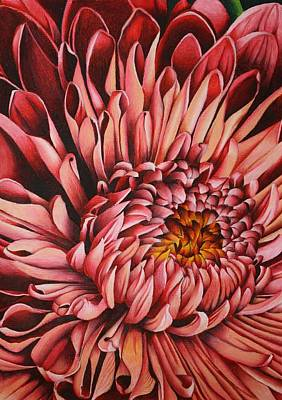 Drawing - Pink Mum by Bruce Bley