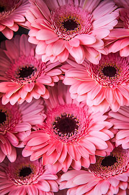 Photograph - Pink Peach Gerbera. Amsterdam Flower Market by Jenny Rainbow