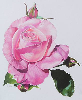 Mixed Media - Pink Rose by Constance Drescher