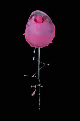High Speed Photograph - Pink Rose by Jaroslaw Blaminsky