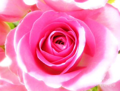 Photograph - Pink Rose by Nina Ficur Feenan