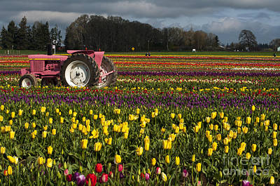 Pink Tractor Art Print by Mandy Judson