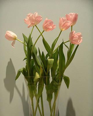 Pink Tulips Art Print by Karen Nicholson