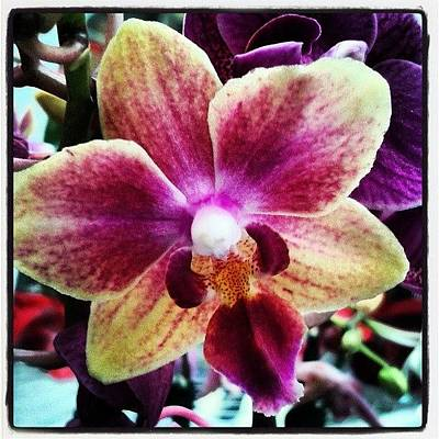Orchids Photograph - #pinkflower #pinkflowers #pink #flowers by Erica Mason