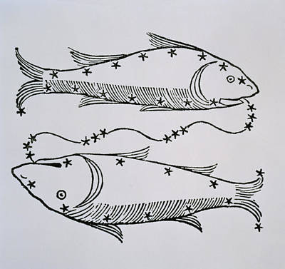Signs Of The Zodiac Drawing - Pisces by Italian School