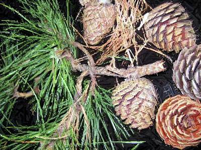 Pitch Pine Cone Art Print