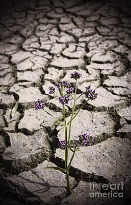 Plant Growing Through Dirt Crack During Drought   Art Print