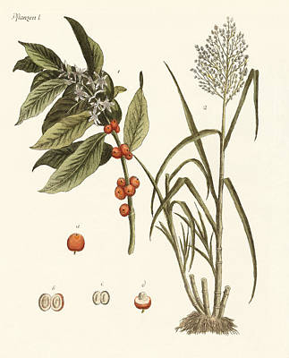 Plants From Hot Countries Art Print by Splendid Art Prints