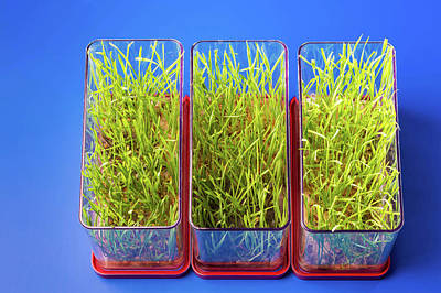 Life New Beginnings Photograph - Plants Growing In Containers by Wladimir Bulgar