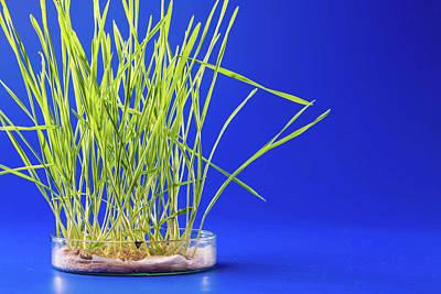 Life New Beginnings Photograph - Plants Growing In Petri Dish by Wladimir Bulgar