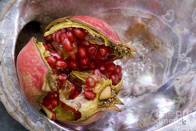 Photograph - Pomegranate On Abalone by Cindy Garber Iverson