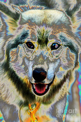 Photograph - Pop Art Husky by Doc Braham